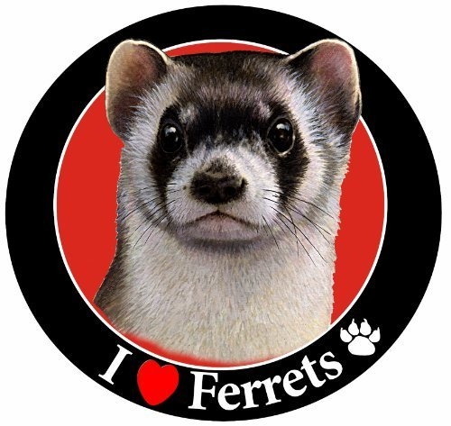 I Love Ferrets Car Magnet With Realistic Looking Ferret Photograph In The Center Covered In High Quality UV Gloss For Weather and Fading Protection Circle Shaped Magnet Measures 5.25 Inches Diameter by E&S Imports, Inc