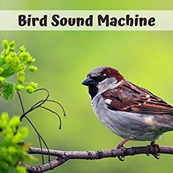 Bird Sound Machine - Sleep Sound White Noise Machine with 20 Natural Soothing Sounds