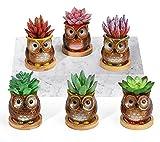 Roylvan 6 PZS Macetas de Suculentas Cerámicas, 6,5 cm Tiestos de Cactus con Orificios Drenaje Bandejas Bambú Relieve Búho Elegante Depuración Aire para Decoración Hogar Oficina Ventana, Multicolor