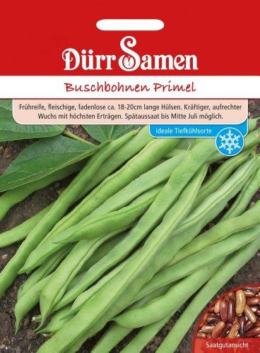 Bohnen - BuschBohnen - Primel von Dürr-Samen