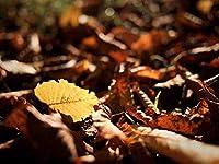 APANジグソーパズル500ピース-自然の風景