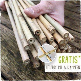 26 Bambusstäbe - Bambusstangen 152 cm lang/ 10-12 mm dick + Zubehör zum Testen