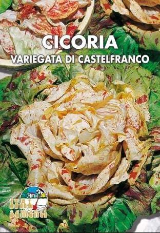 Italsementi Cicoria Variegata di Castelfranco