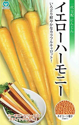 丸種 人参 イエローハーモニー ネオコート種子 約1,000粒(にんじん・ニンジン)