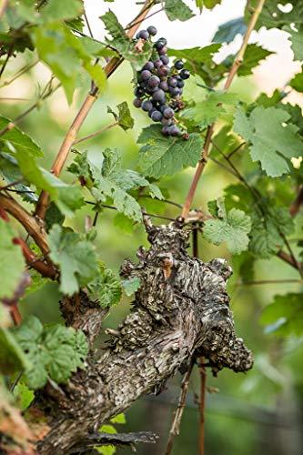 Wuerttemberger-Wein-CELLARIUS-Lemberger-QW-Im-Holzfass-gereift-trocken-1-x-075-l