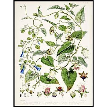 Tobacco Print Vintage Botanical Poster Wall Art Decor Plant Kitchen Art Botanical Nursery Botanical Flower 9x11