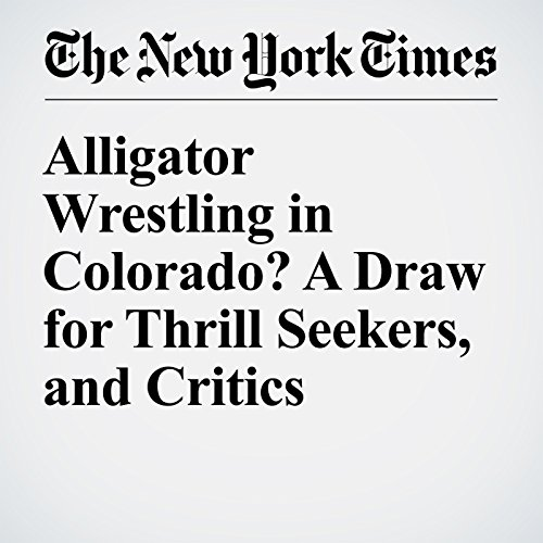 Alligator Wrestling in Colorado? A Draw for Thrill Seekers, and Critics cover art
