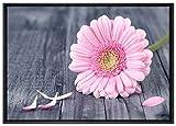 Pinke Gerbera auf rustikalem Boden Leinwandbild 100x70 cm