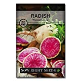 Sow Right Seeds - Watermelon Radish Seed for Planting - Non-GMO Heirloom Packet with Instructions to Plant a Home Vegetable Garden - Great Gardening Gift (1)