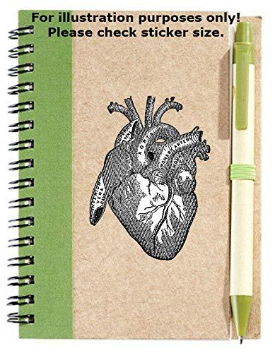 Sticker-Designs 10cm! Klebe-Folie Wetterfest Made-IN-Germany Anatomie Latein Bezeichnung Heart Herz No260...