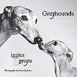 Greyhounds Big and Small