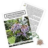 Blauglockenbaum Kiribaum Samen (Paulownia tomentosa) -...