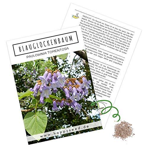 Blauglockenbaum Kiribaum Samen (Paulownia tomentosa) - Schnellst wachsender Baum der Welt mit violetten & glockenförmigen Blüten