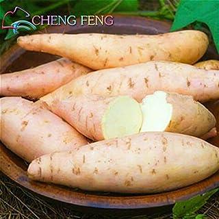 50pcs / bolsa de Alto Rendimiento Vegetable Seeds Ipomoea