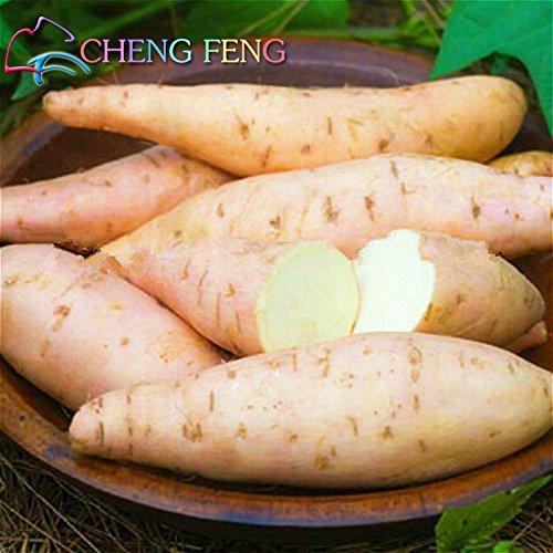 50pcs / bolsa de Alto Rendimiento Vegetable Seeds Ipomoea batatas semilla de...