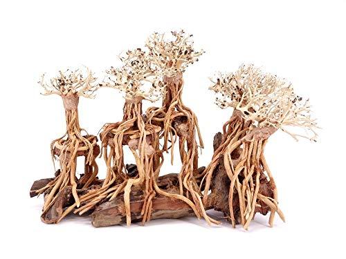 Aquarium Wurzel Bonsai Exclusiv Größe M 40x25cm Nr.111 Holz Deko Aquascaping Bonsaibaum Dekoration Landschaft Moos Echtholz Natur