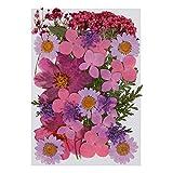 Gobesty Flor prensada Mixta, Flores secas naturales DIY Art Decoraciones florales Colección Regalo Follaje Floral Artcraft, Púrpura