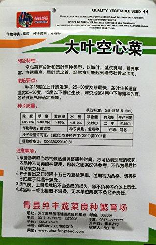 Laiteron végétale Endive de semences, Mosaic endive - 50 pcs / lot