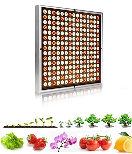 Luz de la planta Luz de crecimiento de espectro completo Interior Led 3500K Grow Light 1000W Full Spectrum Phyto Lamp Led Grow Carpa Lámpara Para Plantas Cultivo Planta Semillas Flores