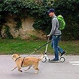 Joggingleine für Hunde von Nikkipet Verstellbarer, wasserabweisender Laufgürtel mit 2 Fächern & elastische, reflektierende 120 cm Leine & – Premium Flexi Jogging Hundeleine + Gürteltasche für große & mittlere Hunde - 8