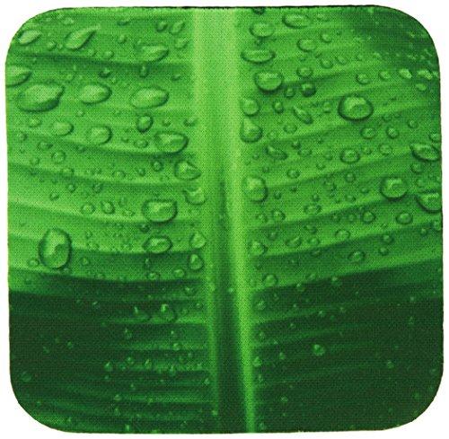 3dRose CST 15476_ 2grün Banana Leaf Wasser Drops-Soft Untersetzer, Set von 8