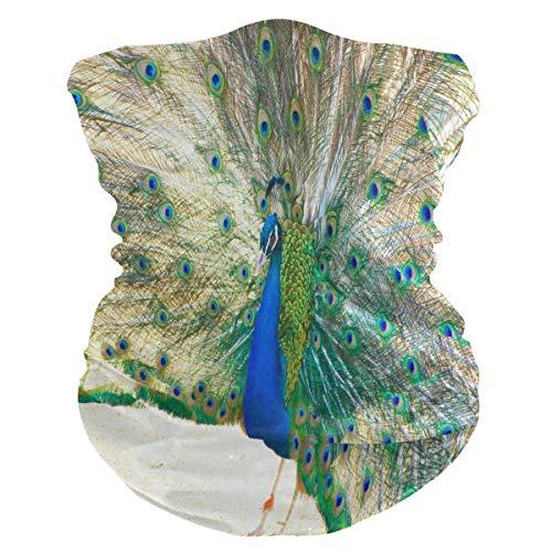 Funnyy - Pañuelo de plumas de pavo real para el cuello, polaina, pañuelo bandana, pasamontañas, protector para la cara, sin costuras, mágico, pañuelo para la cabeza, multifuncional, diadema para deportes al aire libre, yoga, correr