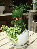 犬(イヌ)さん チンチンワンちゃん Sサイズ アニマル トピアリー モス 動物シリーズ 斑入りフィカスプミラを植え付けています インテリア陶器鉢・受け皿付き ミニ観葉植物