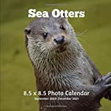 Sea Otters 8.5 X 8.5 Calendar September 2020 -December 2021: Monthly Calendar with U.S./UK/ Canadian/Christian/Jewish/Muslim Holidays-Nature Animals Wildlife Weasel