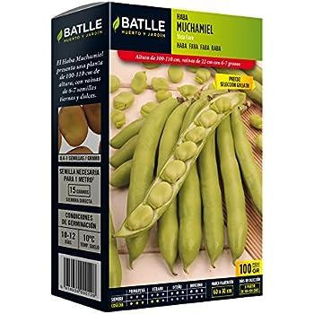Semillas Leguminosas - Haba Muchamiel 100 Gr. - Batlle: Amazon.es ...