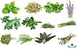 Kit 12 Varietà Semi Erbe Aromatiche Officinali con 12 Vasetti Biodegradabili Guida Coltivazione Giardino Balcone Cucina