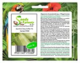 Pezzi - 8x Zucchina Grey Griglia F1-Alte Varietà Seme Verdure Giardino K458 - Seeds Plants Shop Samenbank Pfullingen Patrik Ipsa