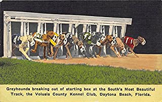 Daytona Dog Track >> Amazon Com The Kennel Club Collectibles Fine Art