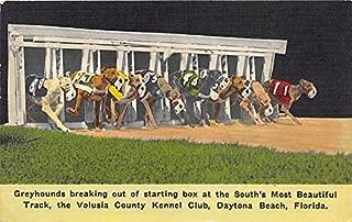 kennel club daytona beach florida