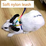 Rabbit Harness Lead Leash Soft Nylon, Adorable Colorful Rainbow Adjustable Harness Collar, Outdoor Walking Buckle Leash