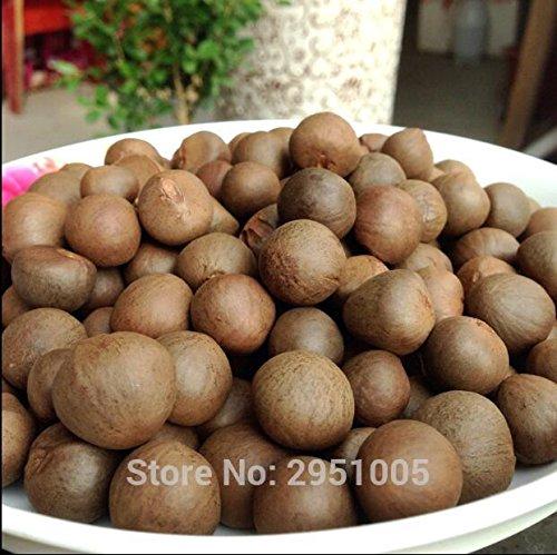 20pcs / lot de thé vert chinois arbre Graines Bonsai plante bricolage thé pour la santé Bonsai théier jardin Livraison gratuite