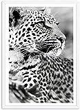 Pintura de arte de pared 60x80 cm sin marco nórdico blanco y negro animal cheetah imprimir carteles e impresiones arte de pared pintura cuadros decoración para el hogar