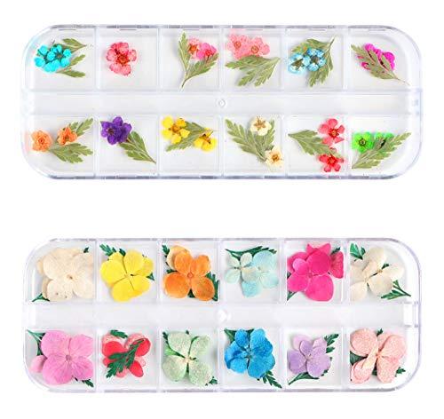 DMFSHI Flor Secada para Uñas, 2 Cajas de Arte de Uñas Flor Real Seca, Aplique de Uñas 3D Flor Natural Preservada Manicura Decoración de Uñas para Puntas de Uñas Fabricación de Joyas de Resina DIY