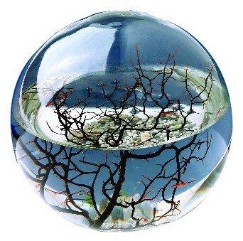 Ecosphere Kugel 10 cm mit LED Beleuchtung - Mini Aquarium