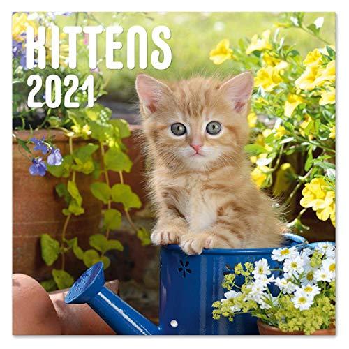 Grupo Erik Calendario 2021 da Muro Cat Simon K. & Greg C, calendario gatti 2021, 16 mesi, 30 x 30 cm