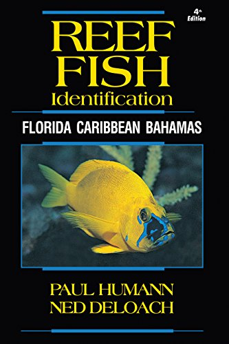 Reef Fish Identification – Florida, Caribbean, Bahamas