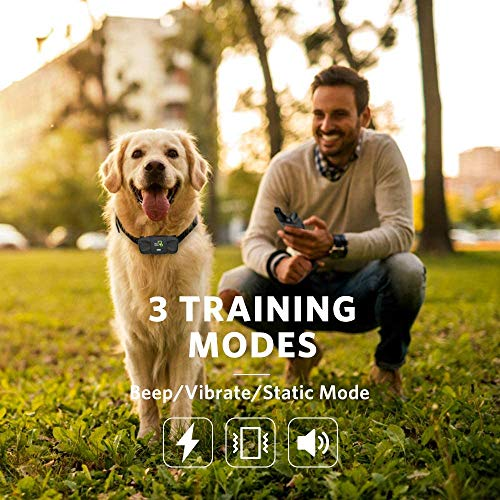 DOG CARE Dog Training Collar