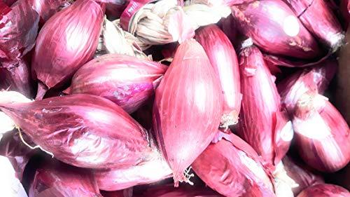 Cipolle di Tropea Kg. 2,5