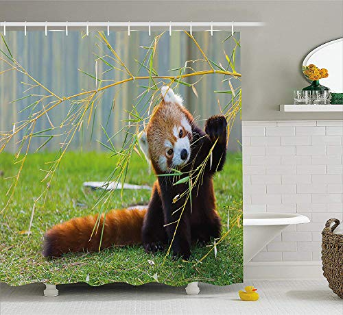 LongTrade Wildlife Decor Shower Curtain Duschvorhang Cute Red Panda on The Field Playing with Bamboo Branches Native Himalayas, Fabric Bathroom Decor Set with Hooks Brown Green 72x72 inch