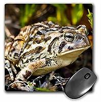 3dRose LLC 8 x 8 x 0.25インチ マウスパッド ファウラーズトード ジム・ギルバート(mp_92464_1)