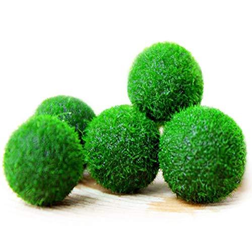aug Palline di Muschio da 5 Pezzi Sfera Decorativa Verde Naturale Ideale per la Decorazione di Ornamenti per Pesci, gamberetti e lumache