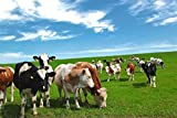 Puzzles Para Adultos De Madera Puzzle De 1000 Piezas, Vaca Pastando Juguete Educativo Intelectual De Descompresión Divertido Juego Familiar Para Niños Adultos