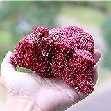 Hengqiyuan Conchaes Marinas Naturales Naturales De Coral Natural, para Decoración del Hogar Decoración De Adornos De Jardinería para Acuario,Rojo,S