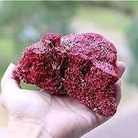 自然天然サンゴの天然貝殻コンチェ、自宅の装飾造園飾りの装飾のための水族館のための自然,赤,M