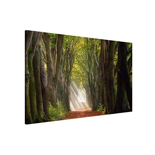 Couleur Beige 74 x 57 cm KalaMitica 25074-902-057 Tableau Magn/étique Mural Acier /Écrivable /à la Craie