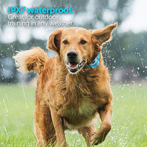 Boshel Dog Bark Collar - Newest Upgraded Anti Bark Electric Dog Collar - Beep, Vibration & Safe Humane Static Shock - For Small, Medium & Large Dogs - Rechargeable & Waterproof Pet Anti Barking Collar